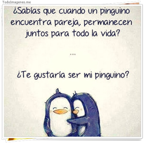 ¿ Sabías que cuando un pingüino encuentra pareja, permanecen juntos para toda la vida ? ¿ Te gustaría se mi pingüino ?