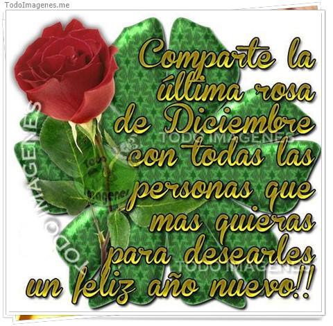 Comparte la ultima rosa de Diciembre con todas las personas que mas quieras para desearles un feliz año me nuevo!!