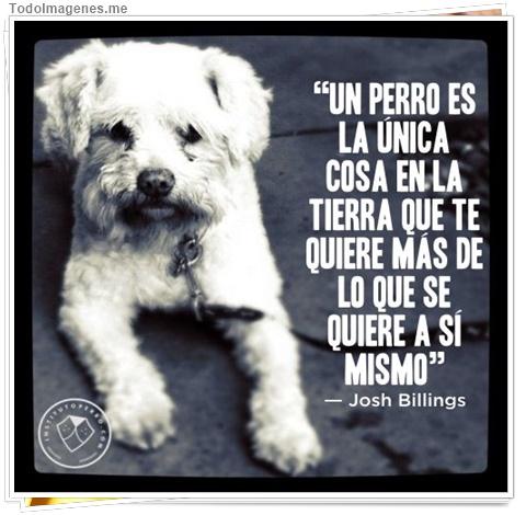 Un perro es la unica cosa en la tierra que te quiere mas de lo que se quiere a si mismo