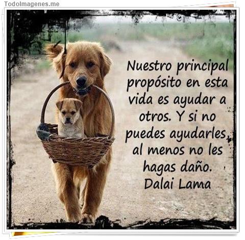 Nuestro principal propósito en esta vida es ayudar a otros. Y si no puedes ayudarles al menos no les hagas daño. Dalai Lama