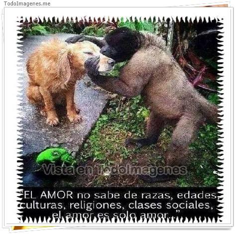 El AMOR no sabe de razas,edades,culturas,religiones,clases sociales,el amor es solo amor...