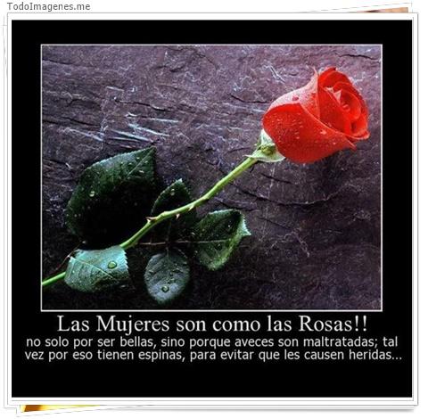 Las mujeres son como las rosas!! no solo por ser bellas, sino porque aveces son maltratadas; tal vez por eso tienen espinas, para evitar que les causen heridas.