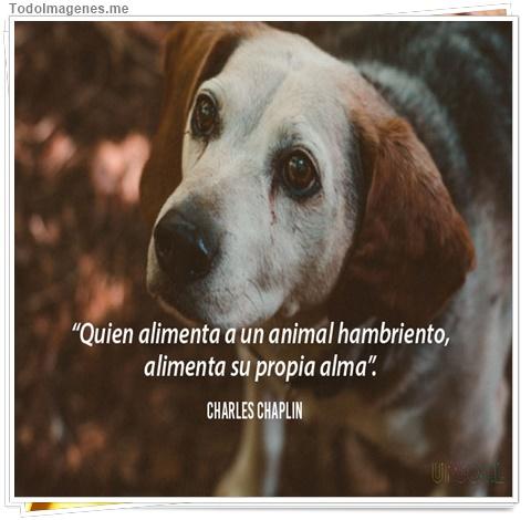 Quien alimenta a un animal hambriento, alimenta su propia alma
