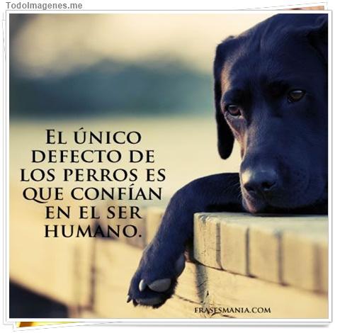 El único defecto de los perros es que confían en el ser humano