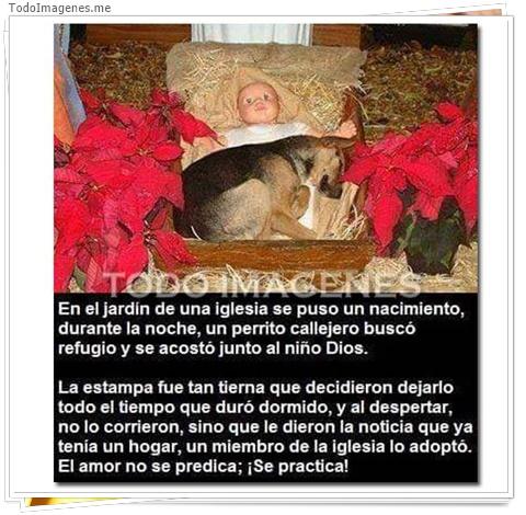 En el jardin de una iglesia se puso un nacimiento, durante la noche, un perrito callejero busxó refugio y se acostó junto al niño de Dios. La estampa fue tan tierna que decidieron dejarlo todo el tiempo que duró dormido, y al despertar,no lo corrieron, si