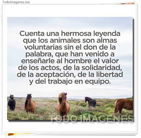 Cuenta una hermosa leyenda que los animales son almas voluntarias sin el don de la palabra,que han venido a enseñarle al hombre el valor de los actor,de la solidaridad,de la aceptacio, de la libertad y del trabajo en equipo
