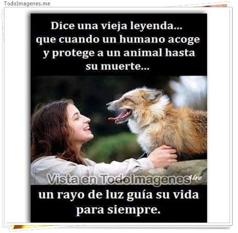 Dice la vieja leyenda...que cuando un humano acoge y protege a un animal hasta su muerte...un rayo de luz guía su vida para siempre.