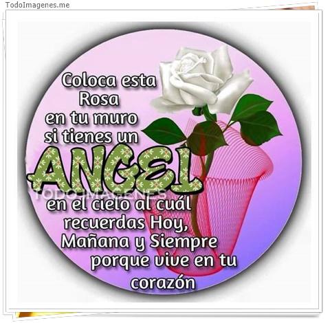 Coloca esta Rosa en tu muro si tienes un ANGEL en el cielo al cual recuerdas Hoy, Mañana y Siempre porque vive en tu corazon